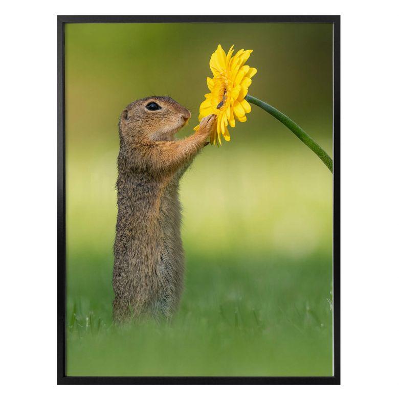 Poster Dick van Duijn - Squirrel holding flower (portrait)