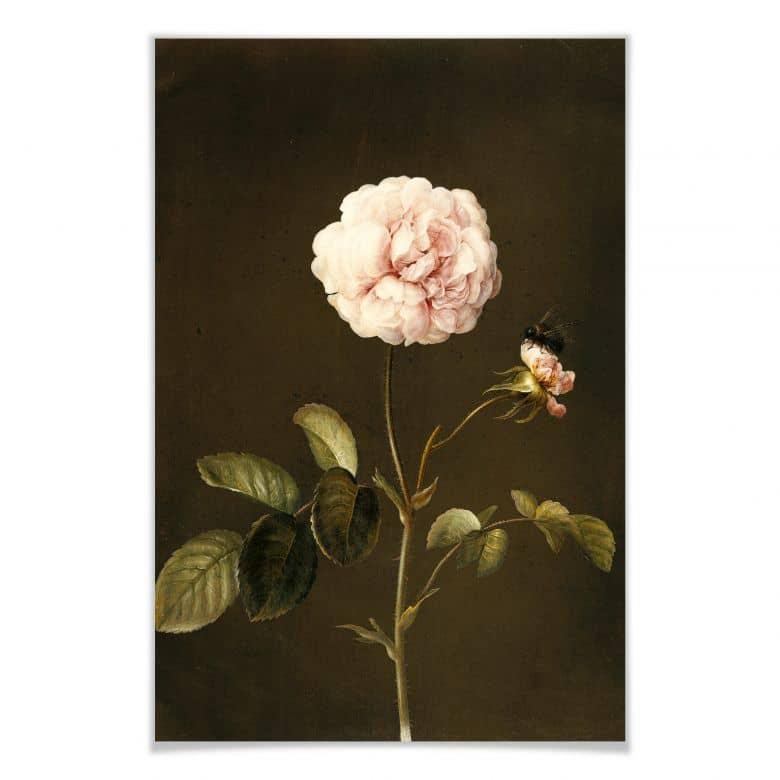poster dietzsch essig rose mit hummel wall. Black Bedroom Furniture Sets. Home Design Ideas