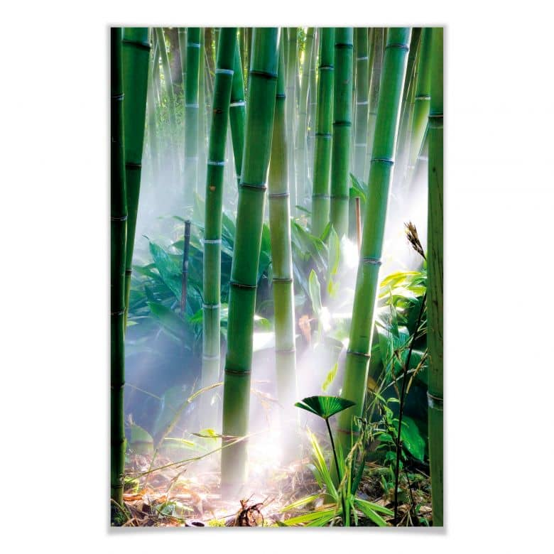 Poster Bamboo Forest