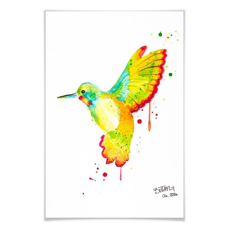 Poster Buttafly - Kolibri