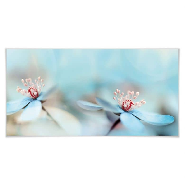 Poster Westum - Zarte Blüten