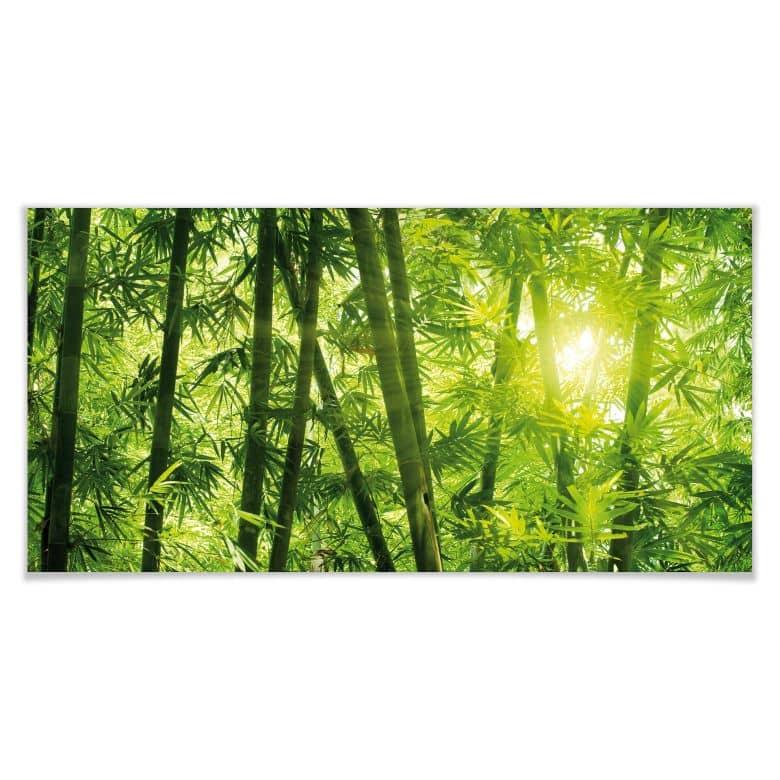 Poster Sonnenschein im Bambuswald - Panorama