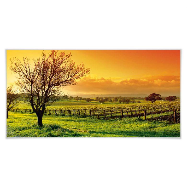 Poster Weinlandschaft - Panorama