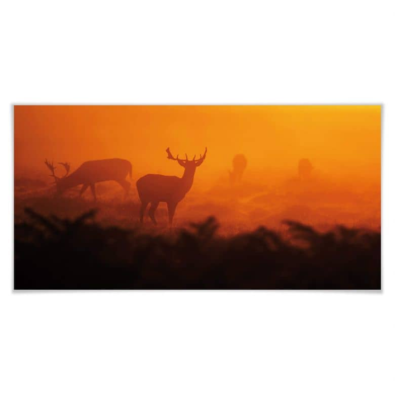 Poster Hirsche im Sonnenuntergang - Panorama