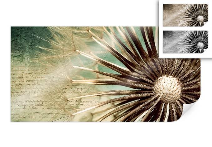 Poster Pusteblumen Poesie - Panorama