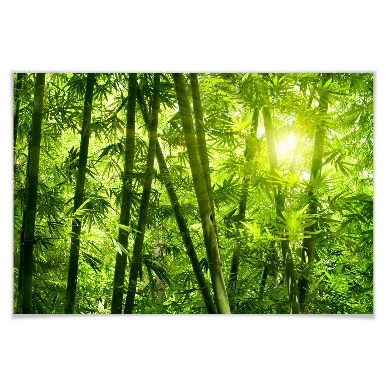 Poster Sonnenschein im Bambuswald