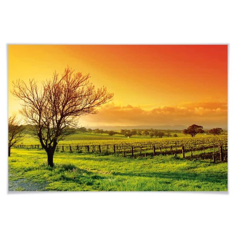 Poster Weinlandschaft