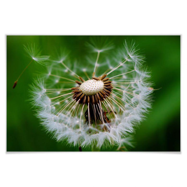Poster Pusteblume im Wind