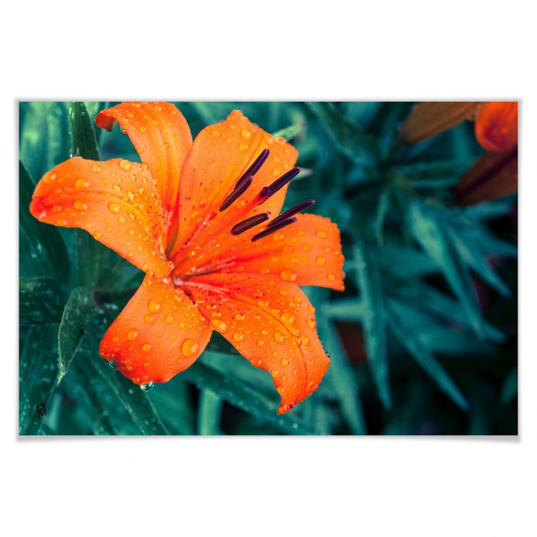 Poster Tropical Lily