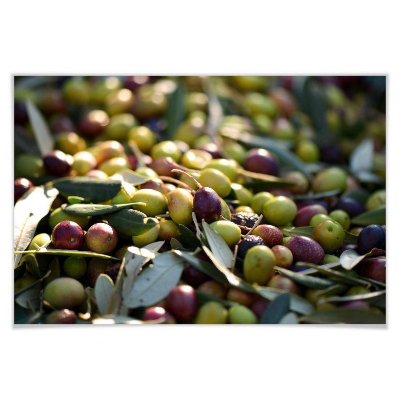 Poster mediterrane oliven wall - Mediterrane wandbilder ...