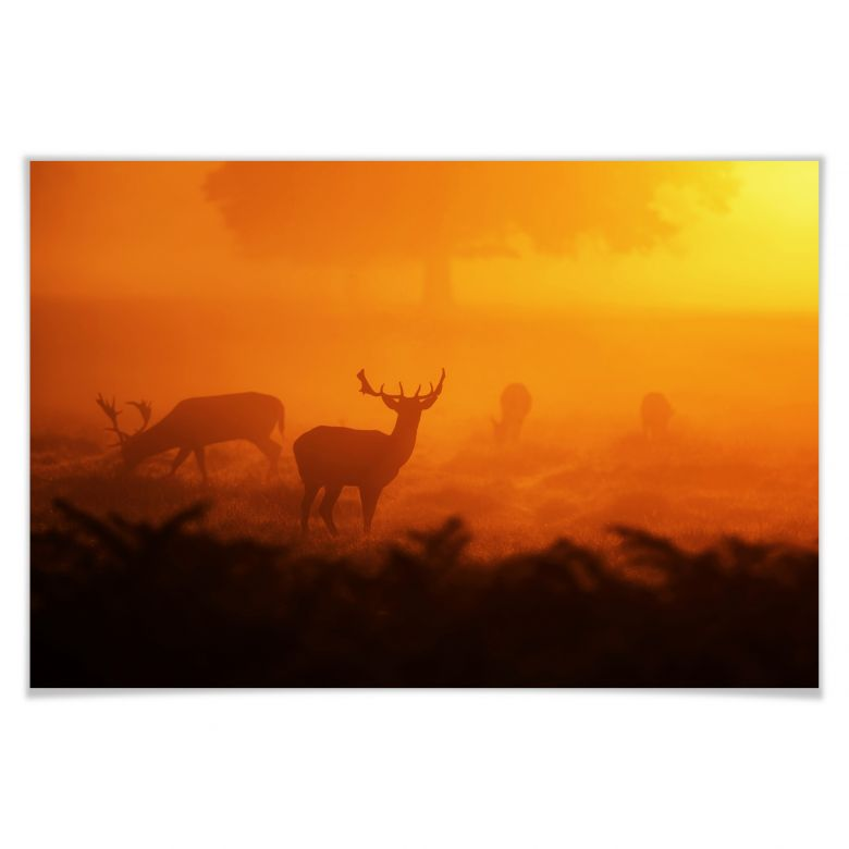 Poster Hirsche im Sonnenuntergang