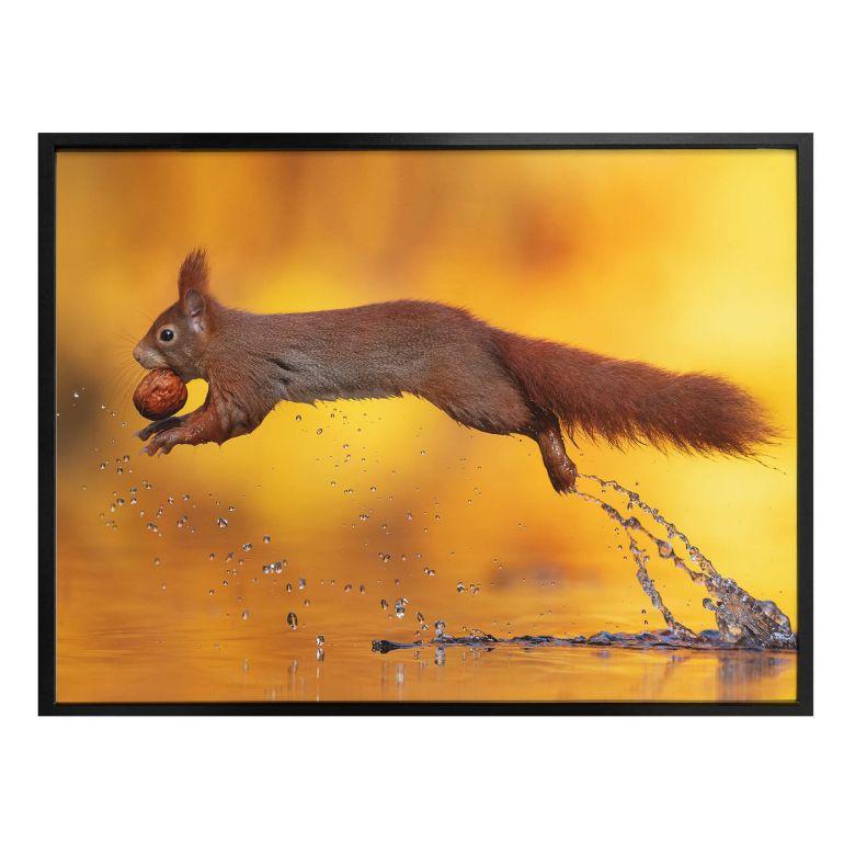 Poster van Duijn - Eichhörnchen im Sprung