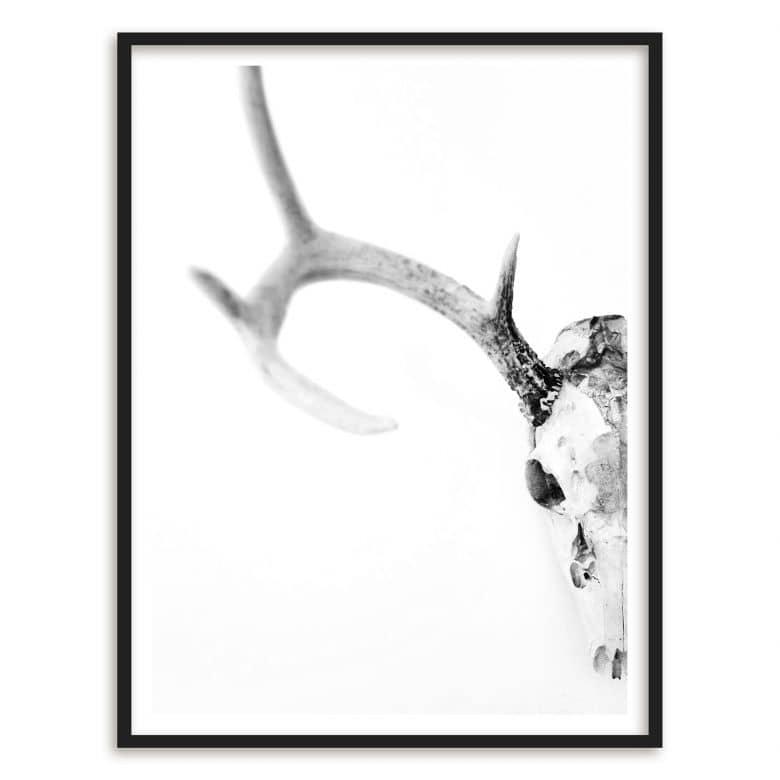 Gerahmtes Poster Skull of a Deer | wall-art.de