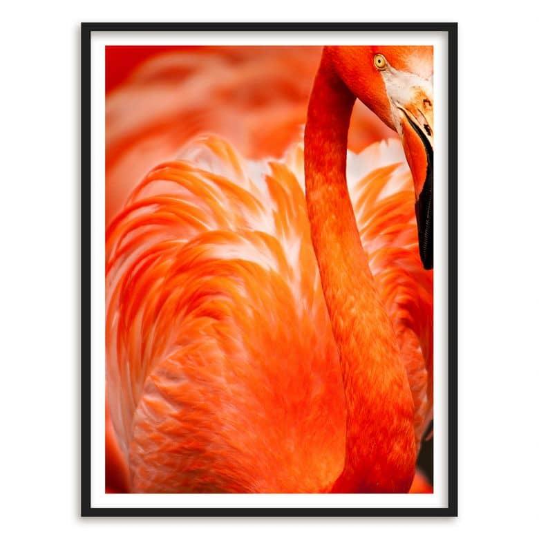 Poster mit Bilderrahmen Flamingo