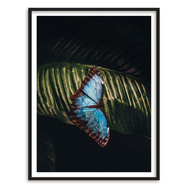Poster Blauer Falter | wall-art.de