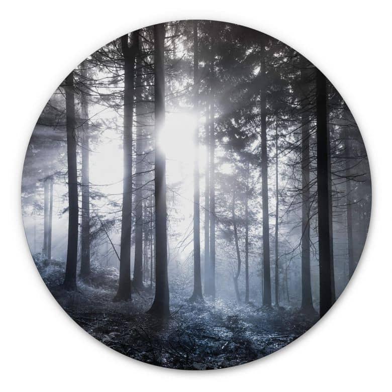 Wandcirkel Sunbeams in the Forest