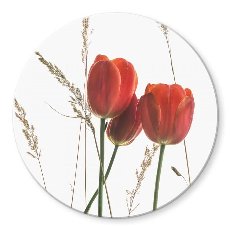 Glasbild Kadam - Flora Tulpe - Rund