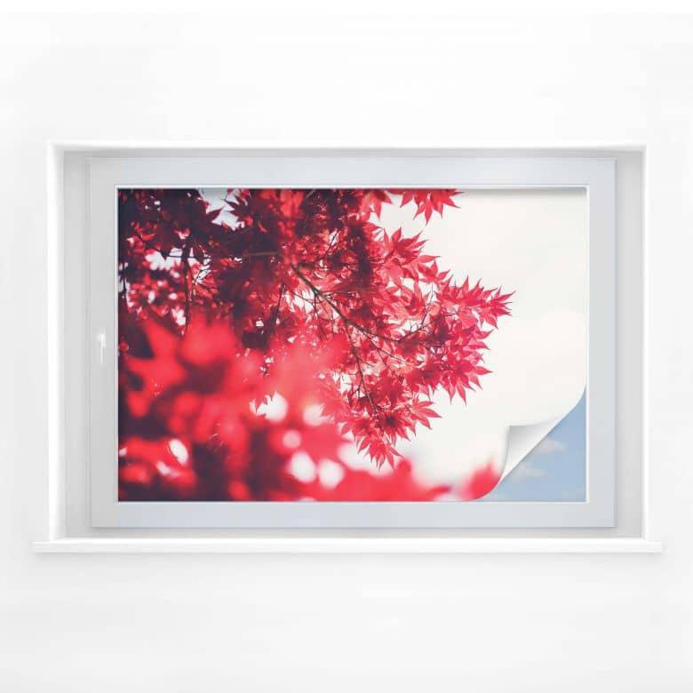 Sichtschutzfolie Ahornbaum im Herbst