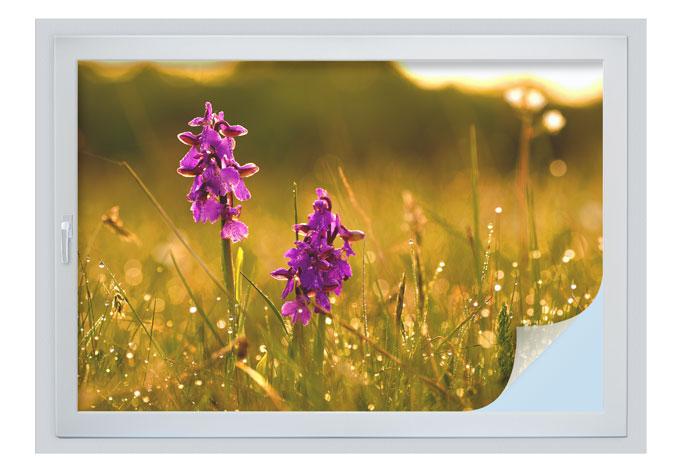 Sichtschutzfolie Blumen im Morgentau