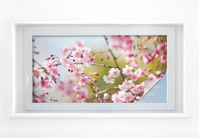 Sichtschutzfolie Cherry Blossoms - Panorama