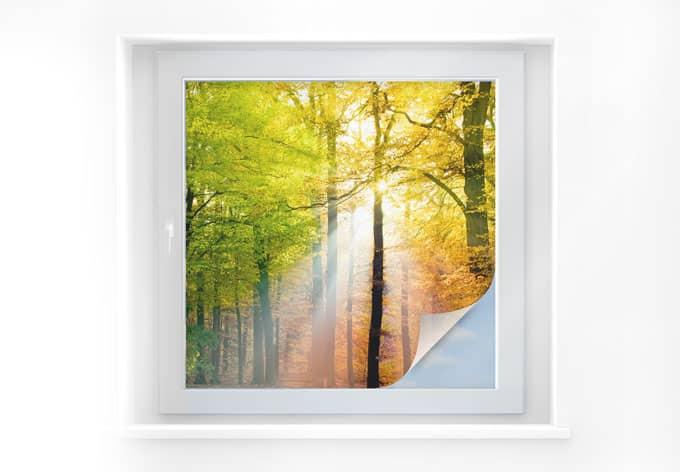 Sichtschutzfolie Goldener Herbst - quadratisch