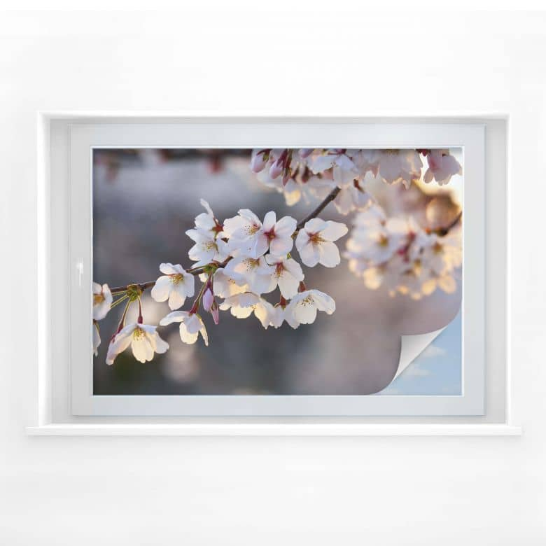 Window foil Cherry Blossom
