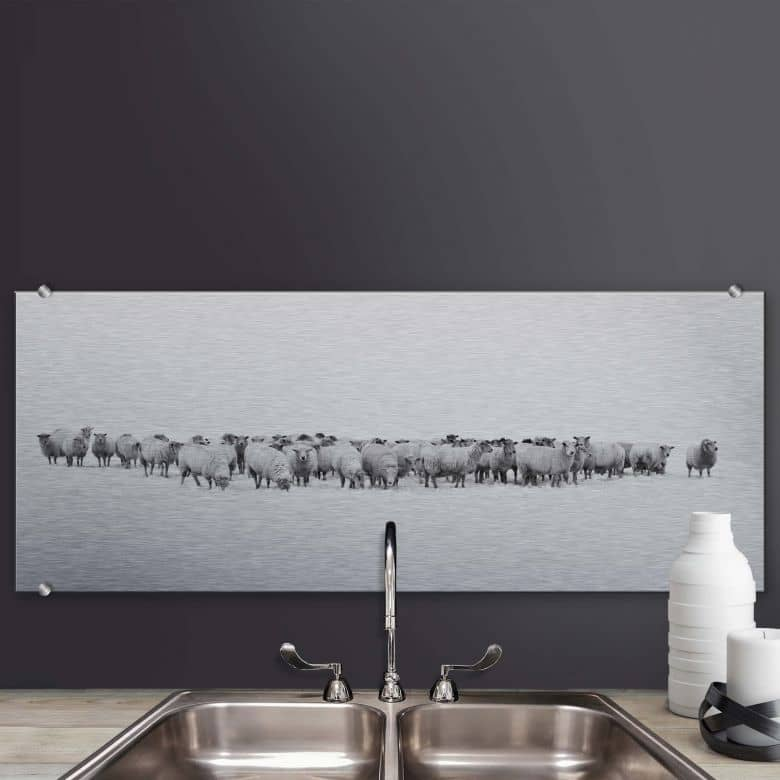 spritzschutz schafherde panorama wall. Black Bedroom Furniture Sets. Home Design Ideas