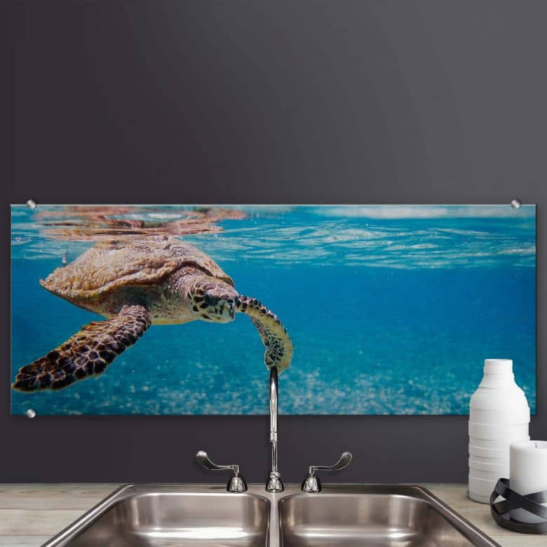 splashback alu dibond traveling turtle panorama. Black Bedroom Furniture Sets. Home Design Ideas