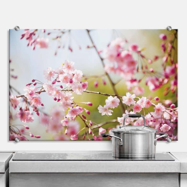 Glasbilder Küche Spritzschutz | spritzschutz cherry blossom web neu