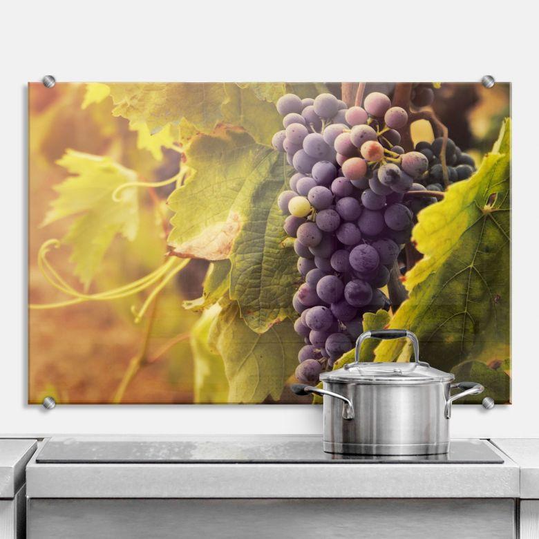 Spritzschutz Toskanische Weinrebe