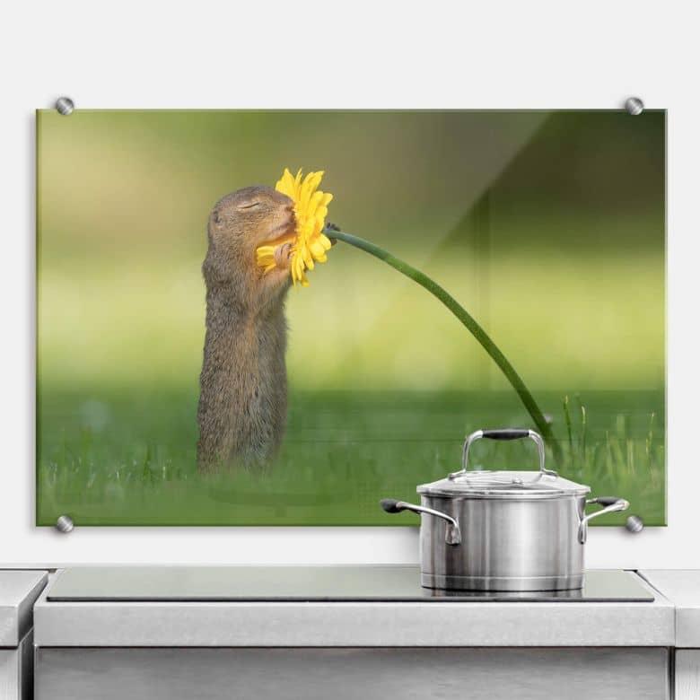 Splasback Dick van Duijn - Squirrel smelling flower