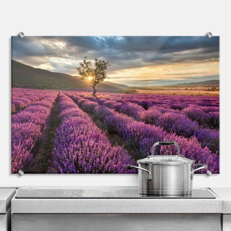 Spritzschutz Lavendelblüte in der Provence