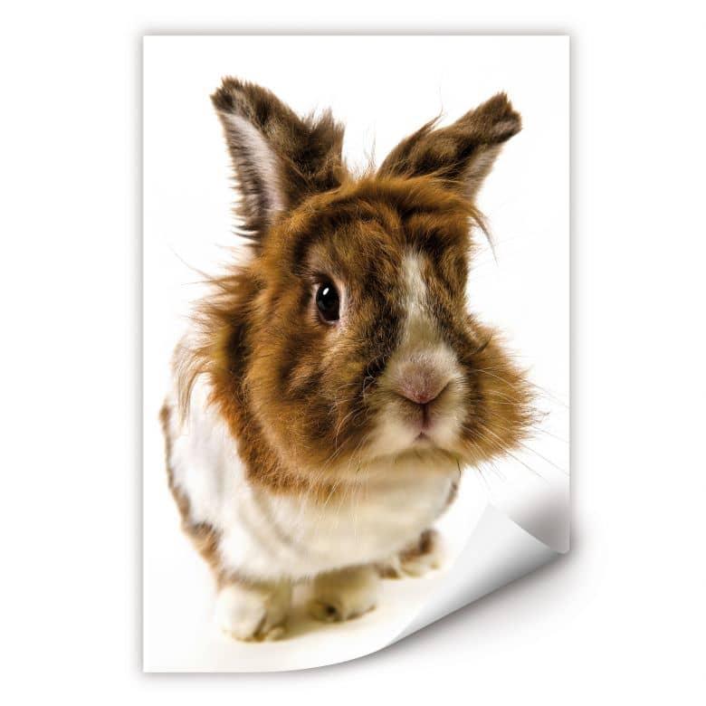 Wallprint W - Rabbit