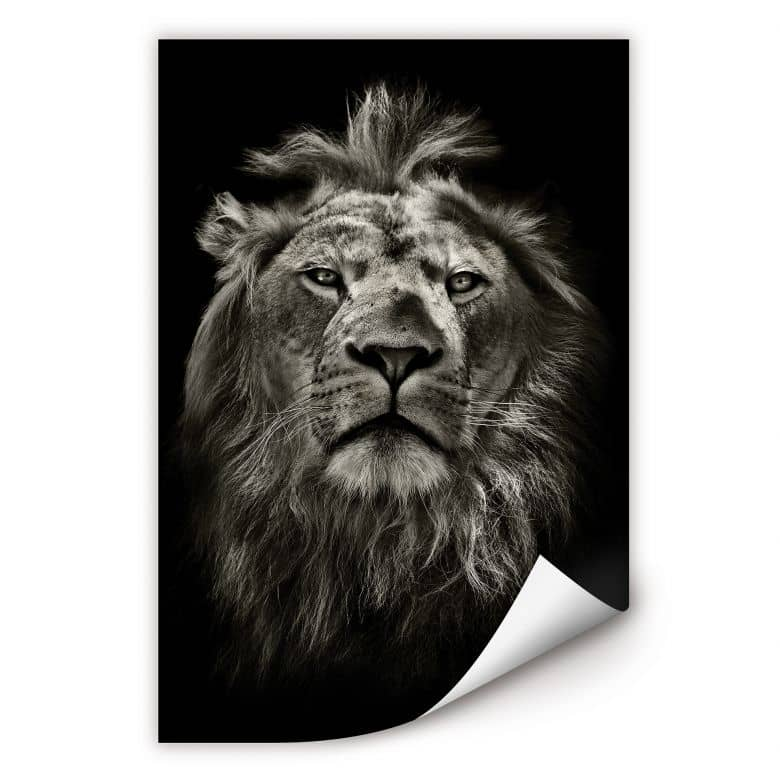 Wallprint W - Lion