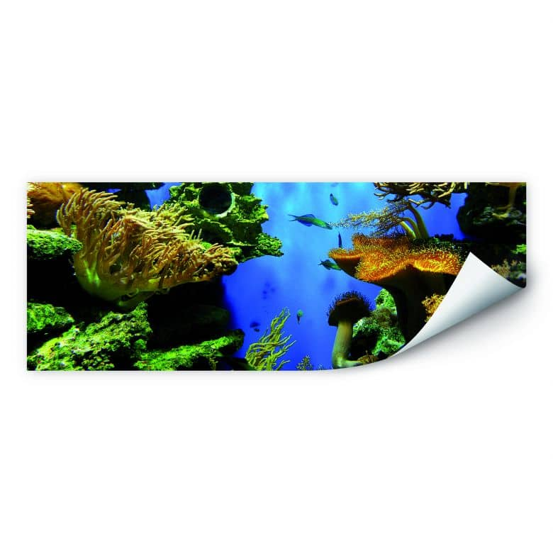 Wallprint W - Korallenriff