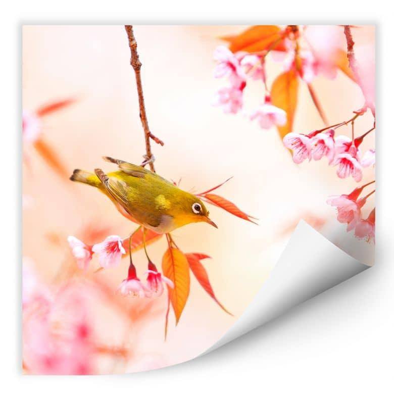 Wallprint W - Vogelgezwitscher in der Kirschblüte - quadratisch