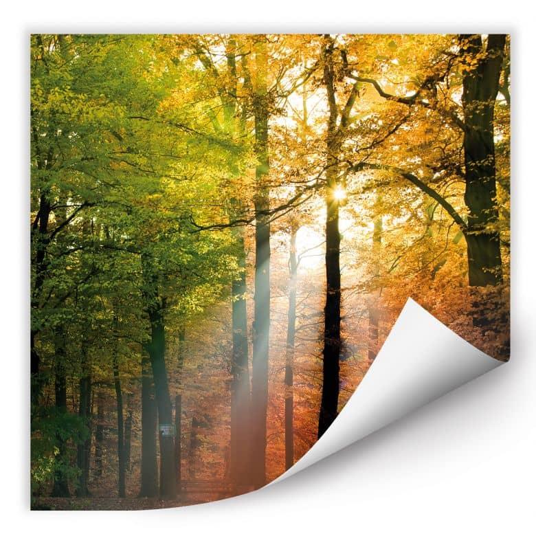 Wallprint W - Goldener Herbst