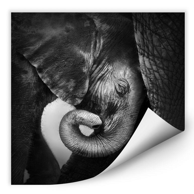 Wallprint W - Das Elefantenbaby