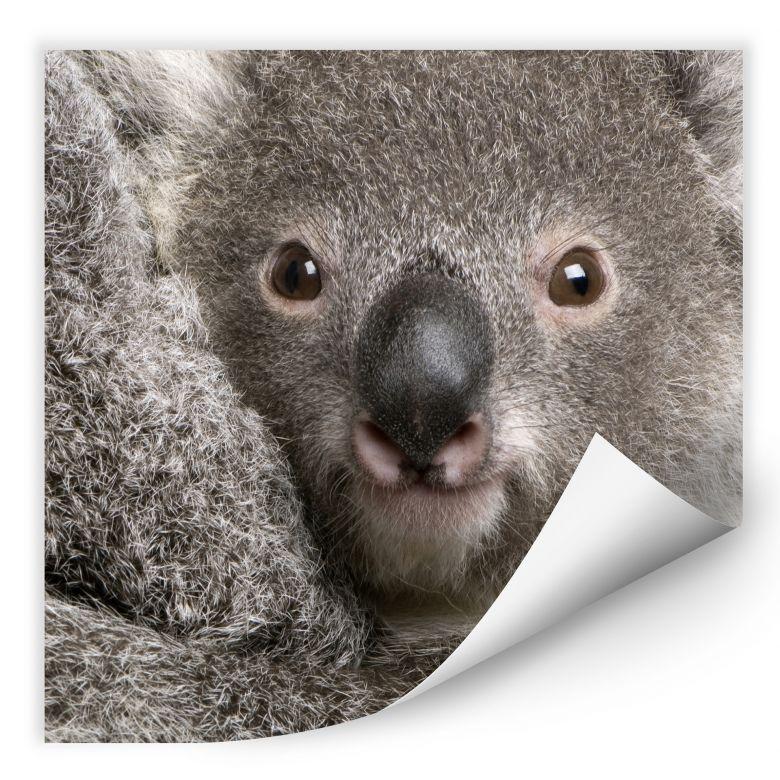 Wallprint W - Cuddly Koala