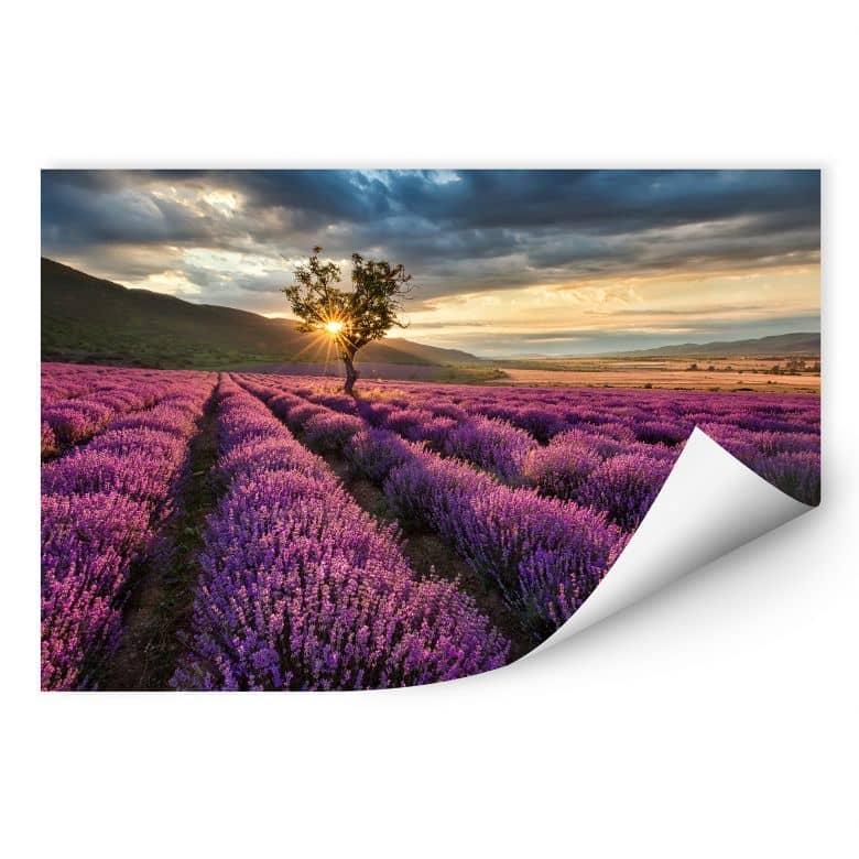 Wallprint W - Lavendelblüte in der Provence