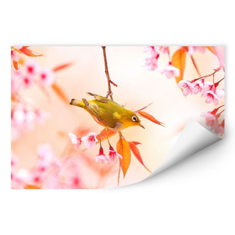 Wallprint W - Vogelgezwitscher in der Kirschblüte
