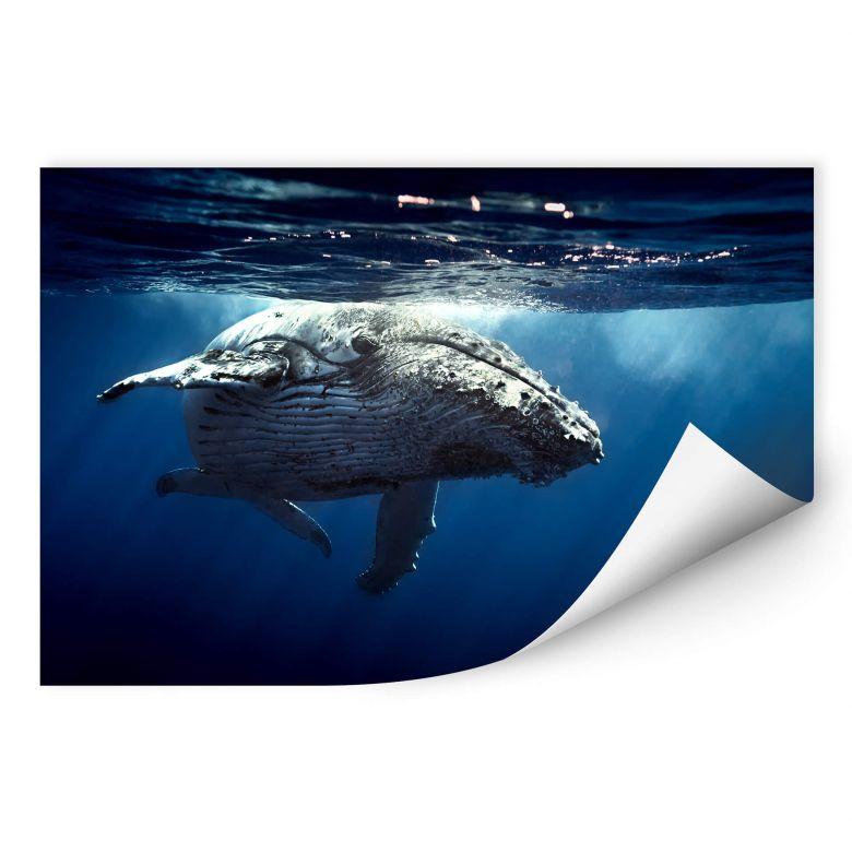 Wallprint W - Buckelwal auf Tauchgang