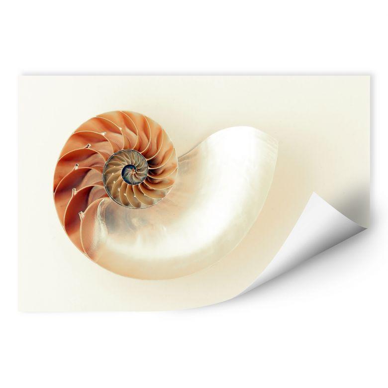 Wallprint Nautilus