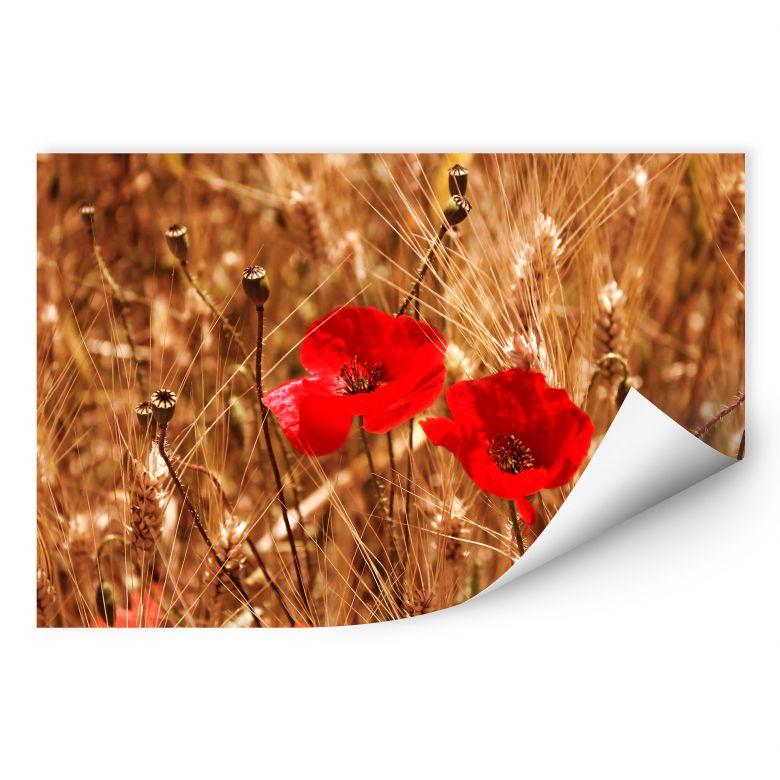 Wallprint Mohnblüten im Feld
