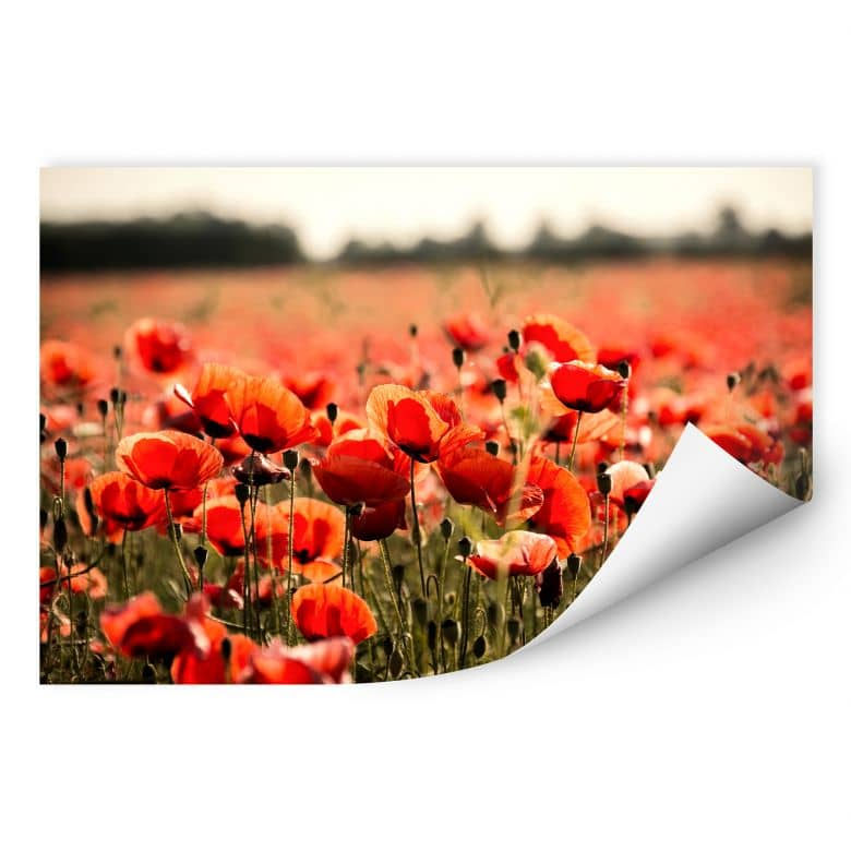 Wallprint Poppy Field