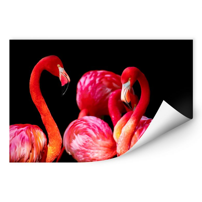 Wallprint Pink Flamingo