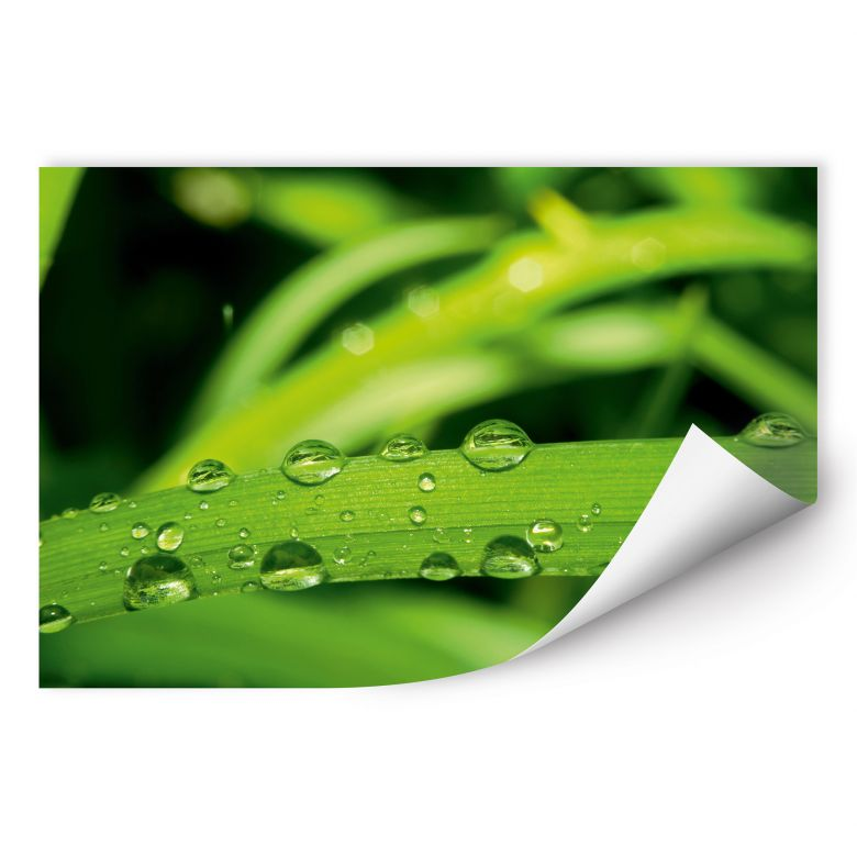 Wallprint W - Natur 5
