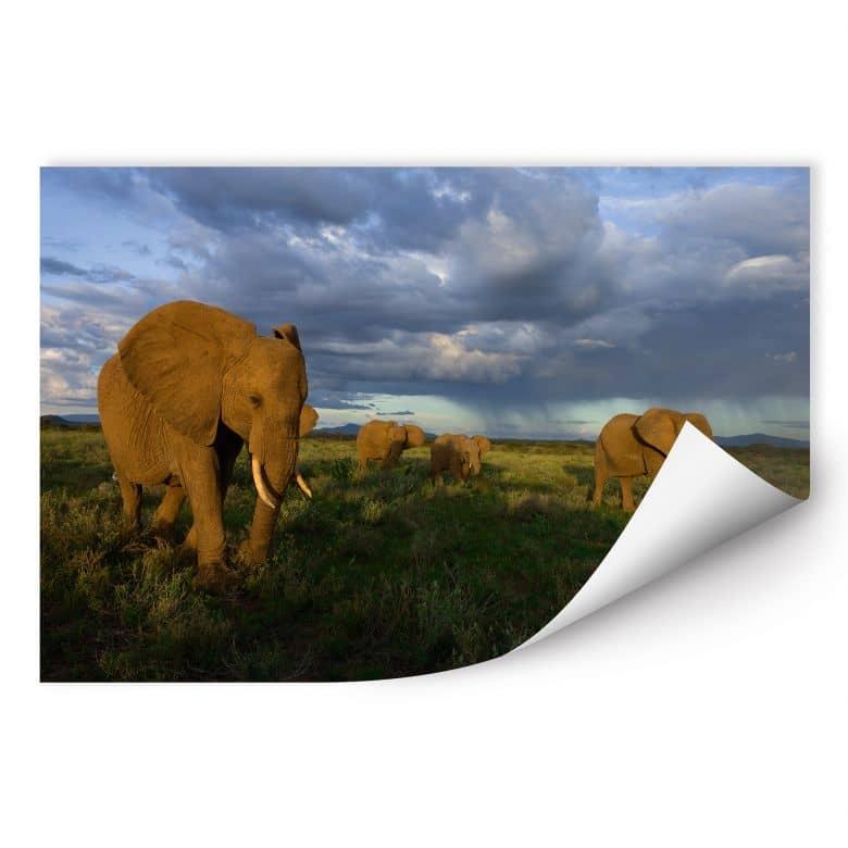 Wallprint W - NG Elefantenherde