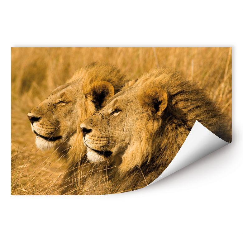 Wallprint W - NG Löwen Paar