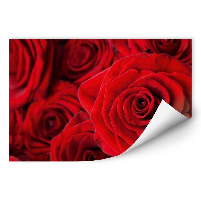wandbild rosenbl ten rose als wandbilder wall. Black Bedroom Furniture Sets. Home Design Ideas